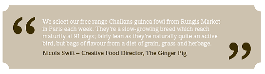 Ginger pig guinea fowl source