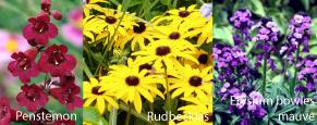 Caro-garden-design-colour-flowers