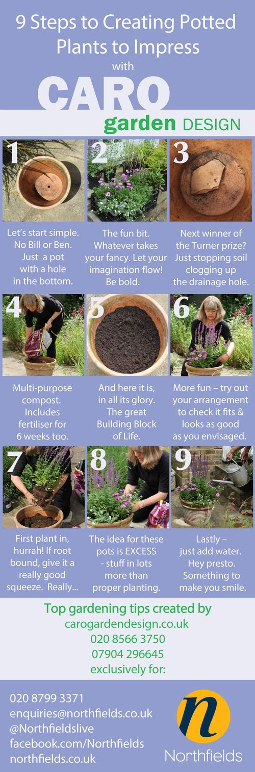 9-steps-to-creating-potted-plants-to-impress
