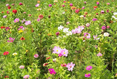 Wildflowers-Increase your kerb appeal with these buyer-attracting plants