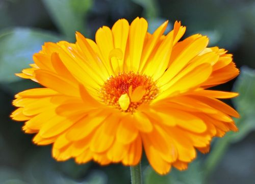 Marigold-Increase your kerb appeal with these buyer-attracting plants