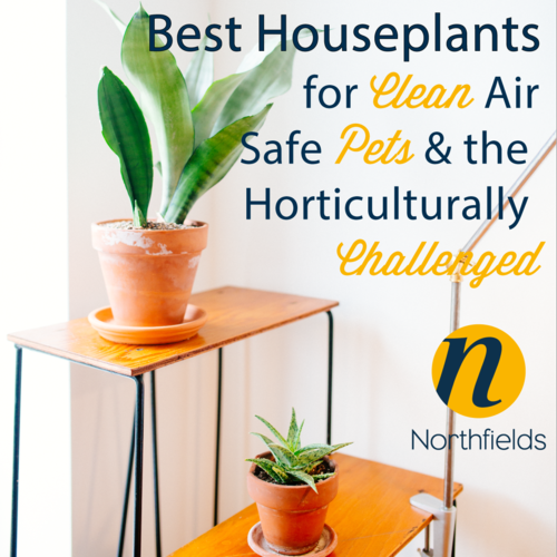 Best-Houseplants-to-help-sell-or-let-your-home